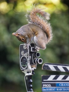 wildlife-photography-squirrels-max-ellis-2__880